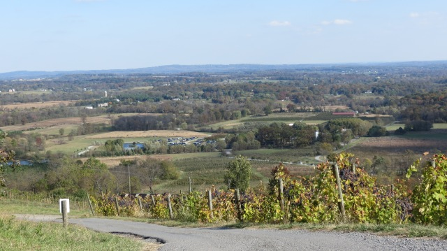 Being Sophisticated at Bluemont Vineyard!